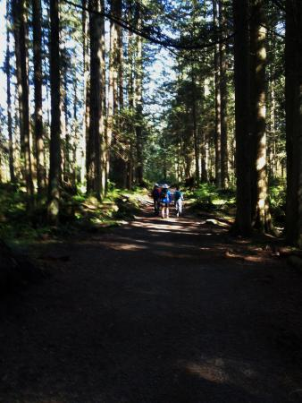 North Vancouver, Canadá: Compact dirt gravel trail on way to Lynn Headwaters Connector