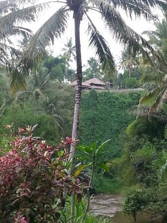 The Samaya Bali Ubud: Glorious views - pece & tranquility