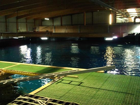 Het grote aquarium   Picture of Rotterdam Zoo, Rotterdam   TripAdvisor