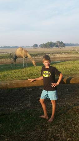 比格弗陶頓農場假日公園照片
