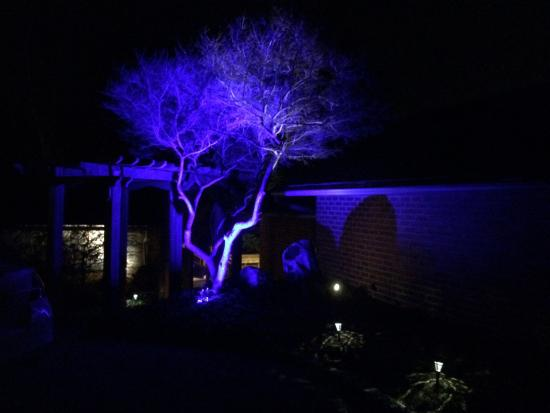 Bittersweet Cottage & Suite: The tree in front of the building is lighted blue at night: such a great idea!