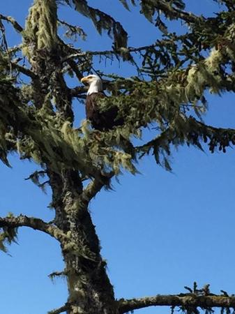 Pacific Sands Beach Resort: Look who we saw on one of our hikes