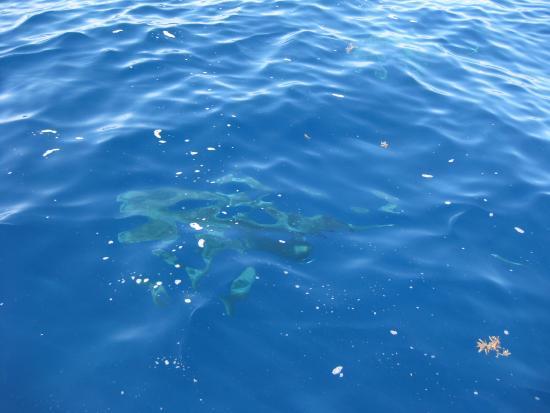 Jupiter, FL: Shark