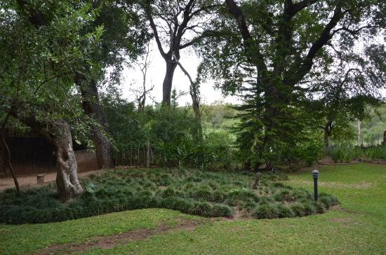 Indlovu River Lodge: small part of the garden