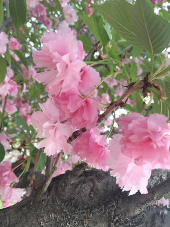Qing Long Si: photo8.jpg
