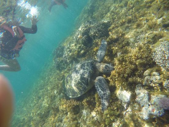 阿波岛潜水
