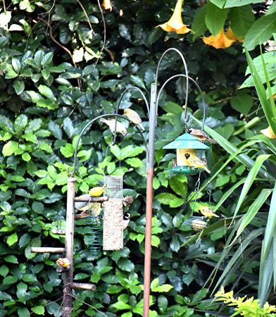 Liz at Lancaster Guesthouse: the bird-feeding station in the garden, next to the pool area