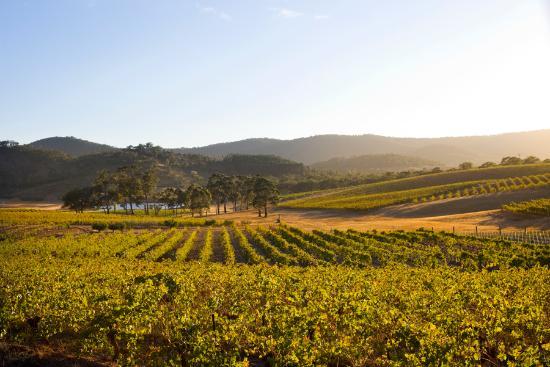 Moonambel, Australia: The Dalwhinnie vineyard