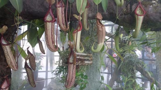 This strelitzia really looks like a bird of paradise for Bodas jardin botanico malaga