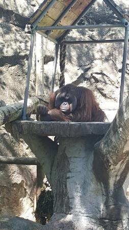 Jackson Zoo: 20160407_122206_large.jpg
