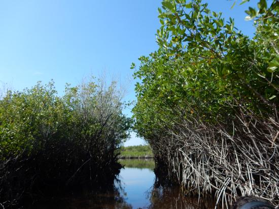Totch's Everglades Island Airboat Tours : Beautiful