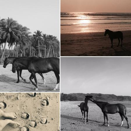 Horizon Ocean View Hotel and Yoga Center: Horses at the end of the day