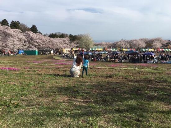ペンペン草 桜