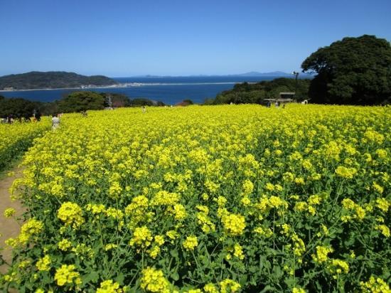 Nokonoshima Island Park