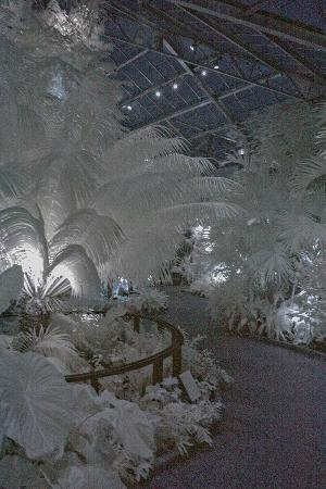Belmont, NC: An IR image of the ferns at night