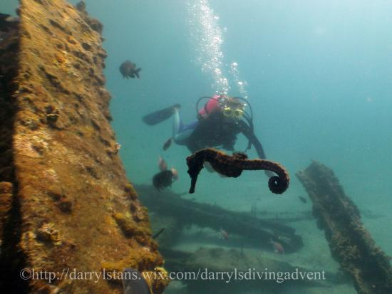 bes day of diving ever us locals review of darryls diving