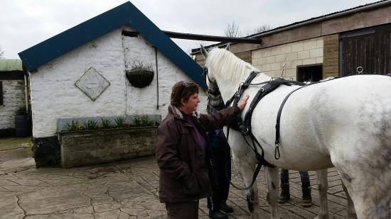 Red House Stables and Carriage Museum: Lovely visit to Matlock