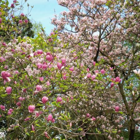 Arbres En Fleur Picture Of Parc De La Tete D Or Lyon Tripadvisor