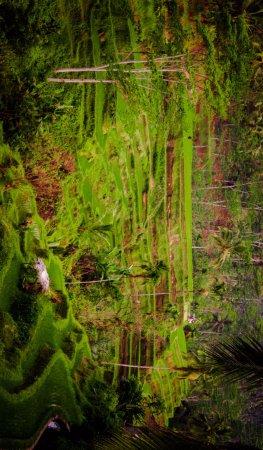 pemandangan sawah yang terasering yang sangat indah foto de rh tripadvisor com br
