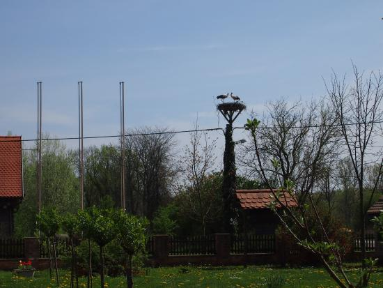 Krapje, Kroasia: Couple of storks in the neighborhood