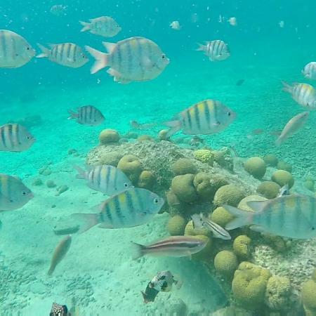 Eden Beach Resort: IMG_20160402_202557_large.jpg