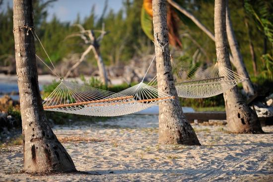 small hope bay lodge  beachside hammocks beachside hammocks   picture of small hope bay lodge andros      rh   tripadvisor