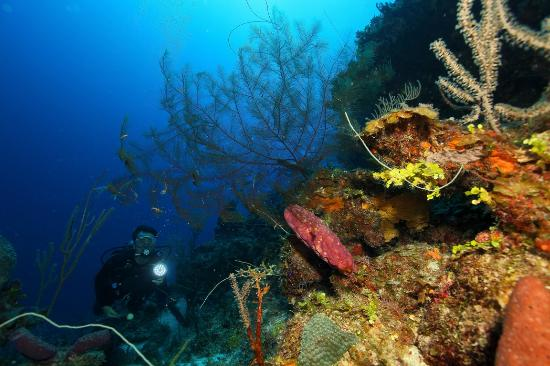 Andros: Scuba dive the 3rd largest barrier reef in the world!
