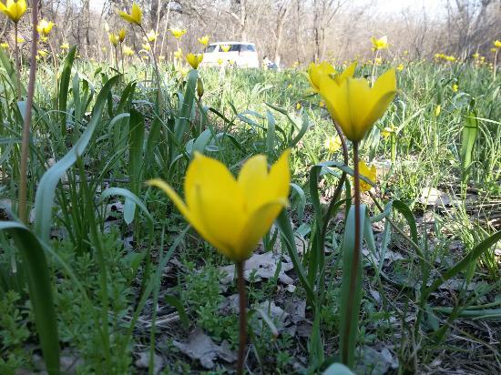 Volgograd Oblast, Russland: Весна пришла!  Только не рвите первоцвет