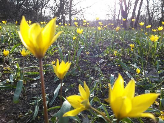 Volgograd Oblast, Russia: Весна пришла!  Только не рвите первоцвет