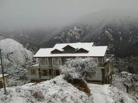 Forest Gaze at Misty Meadows East Home Stay
