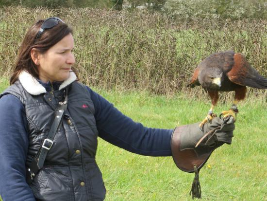 Rawreth, UK: Harris hawk experience