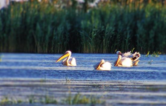 Southeast Romania, Romania: Danube Delta - part of UNESCO World Heritage list