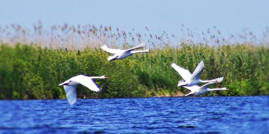 ‪‪Southeast Romania‬, رومانيا: Danube Delta - part of UNESCO World Heritage list‬