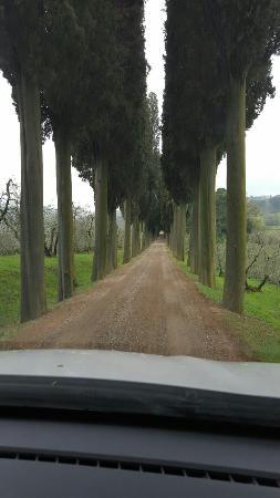 Montalcino, Italien: Franco Biondi Santi - Tenuta Greppo