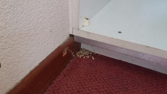 cottage 137, slaapkamer: muizen??? - Foto van Center Parcs Het ...