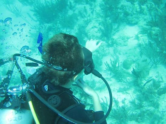 Amy Slate's Amoray Dive Resort: FB_IMG_1460254756203_large.jpg