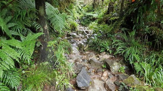 Milford, Yeni Zelanda: 20160410_111702_large.jpg