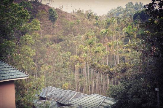 لاكيدي, الهند: Lakkidi Village Resort