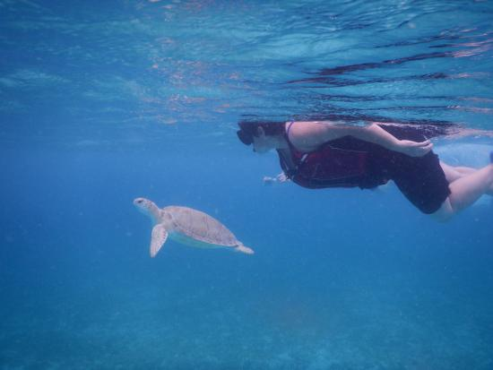 Caneel Bay, เซนต์จอห์น: A sea turtle swimming with us
