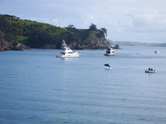 Waiheke Island, Nya Zeeland: There be Dolphins