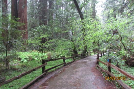 Bear With Me It Was Raining In This Enchanted Forest