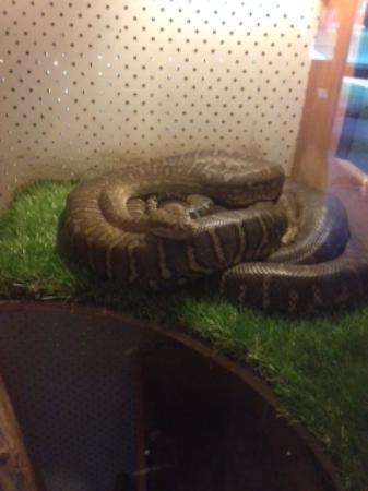Diwan, Australia: Python2