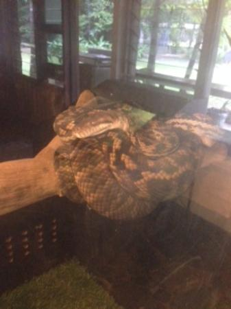 Diwan, Australia: Python3