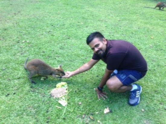 Diwan, Australië: Feeding Joey