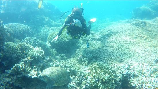 海龜灣潛水度假村照片
