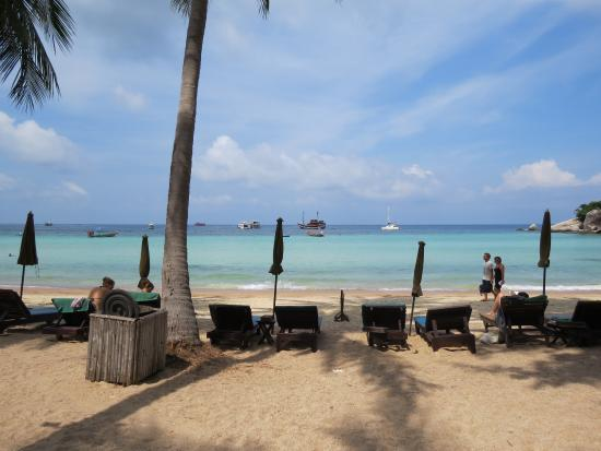 Palm Leaf Resort Photo