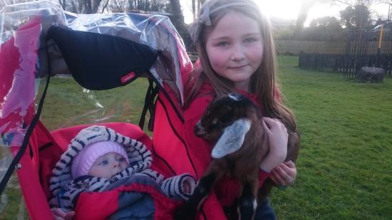 Glendeer Pet Farm: Kids goat