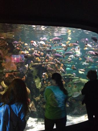 Ripley S Aquarium Myrtle Beach Sc Top Tips Before You