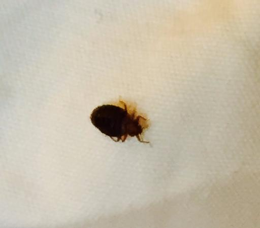 Crystal Gateway Marriott: Bedbug