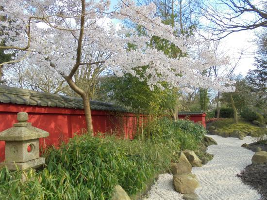 Botanische Tuin Leiden : Japanse tuin picture of botanical gardens hortus botanicus